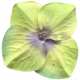 Garden Party Silk Flower- Green