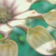 Garden Party Flower Texture Paper