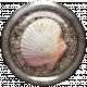 Seashell & Sand Brad