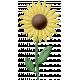 At The Farm- Felt Sunflower 1
