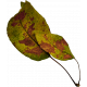 Autumn Pieces- Leaf 03