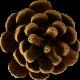 Autumn Pieces- Pinecone