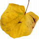Autumn Pieces- Leaf 09