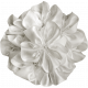 Independence White Flower