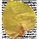 Pressed Leaf 01