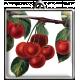 Square Cherries Pendant
