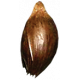 Earth Day Seed 01