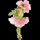 Enchanted- Briar Rose Flower Child