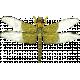 Pond Life- Dragonfly