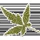 Thankful Leaf Green