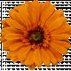 Jan 2021 DC - New Beginnings - Flower 3