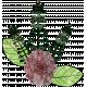 Black Florals_flower1