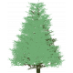 New Year New Day_pine tree
