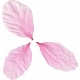 Pink Flower Petals (02)