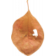 Pumpkin Patch Leaf 02