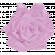 SPRING COLOR PINK LAVENDER VELVET ROSE