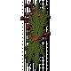 Cardinal Cluster
