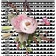 pink floral cluster 2