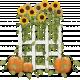 Sunflowers and Pumpkins 2