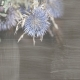 Dried Flowers in the Dark - Blue Thistle