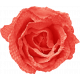 Sweater Weather- Red Fabric Rose