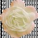 Jane- White and Pink Rose