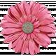 Shine- Large Pink Flower