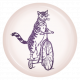 The Good Life: August Bits & Pieces- Cat Riding Bike Flair