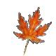 Fading fall Leaf
