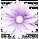 @Sas_Scrapkit_InColorBalance_element03