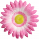 Good Day- Flower Pink