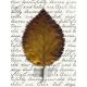 AutumnArt-JournalCard11