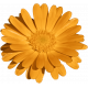 Plum & Marigold- Marigold Sticker Light