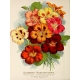 Seriously Floral Pocket Card 16 3x4