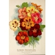 Seriously Floral Pocket Card 16 4x6
