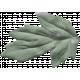 Wildflower Leaf