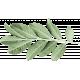 Softly Falling Leaf 1