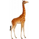 Kenya Elements giraffe
