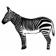 Kenya Elements sticker zebra