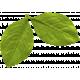 Summer Lovin Elements leaf 1