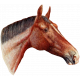 Go West Horses- Horse 8