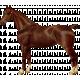 Go West Horses- Horse 4