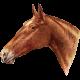 Go West Horses- Horse 2