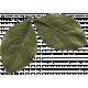 The Good Life: February Elements- leaf 5