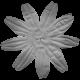 Flower 021 Template