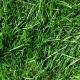 Real Textures 072- Grass