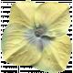 Flower Yellow- Dream Big