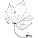 Leaf Stamp Set 001n