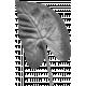 Leaf 038 Template