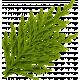 Oregonian Pine Branch - Green